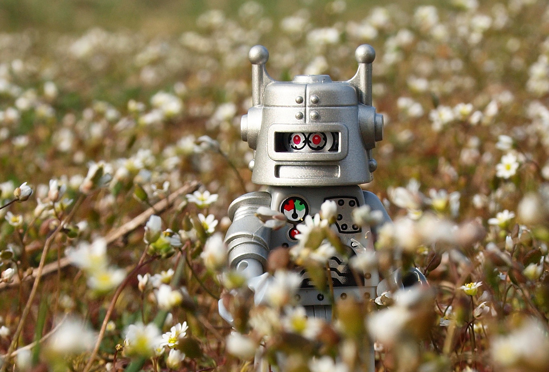 A small toy silver robot in a field of daisies.
