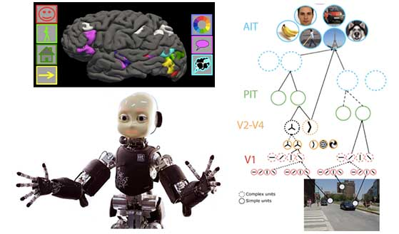 Diagram of human brain highlighting different regions; a process flow diagram about understanding a visual scene; and photo of a humanoid robot.